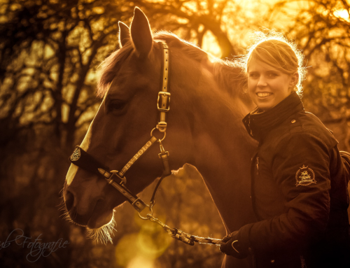 Stimmungsvolle Pferdefotos dank Abendsonne