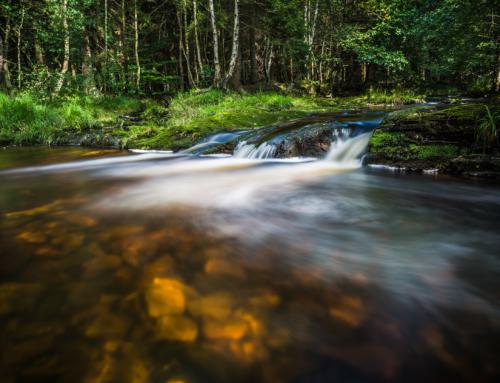 Wild und unberührt: Eine traumhafte Tour ins Hohe Venn