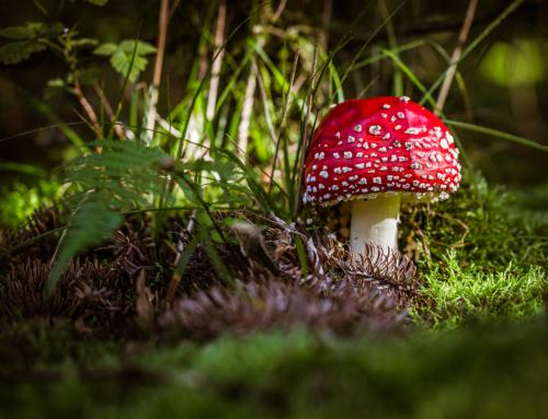 Was für ein Pilzjahr – so faszinierend