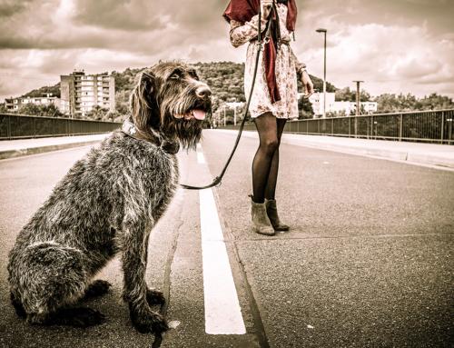 Tierische Fotoreportagen